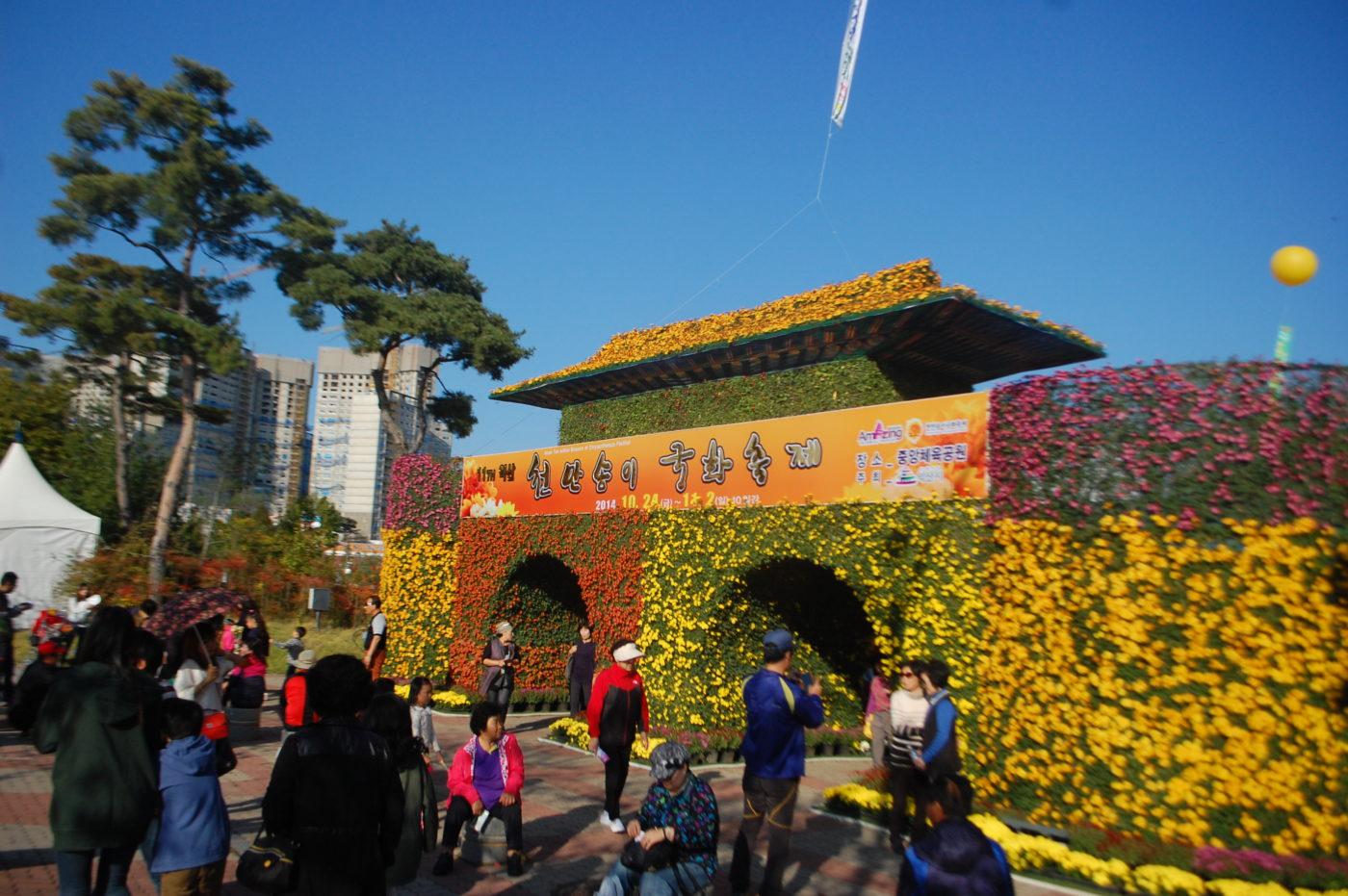 Iksan Chrysanthemum Festival (Rare Vlog from us!)