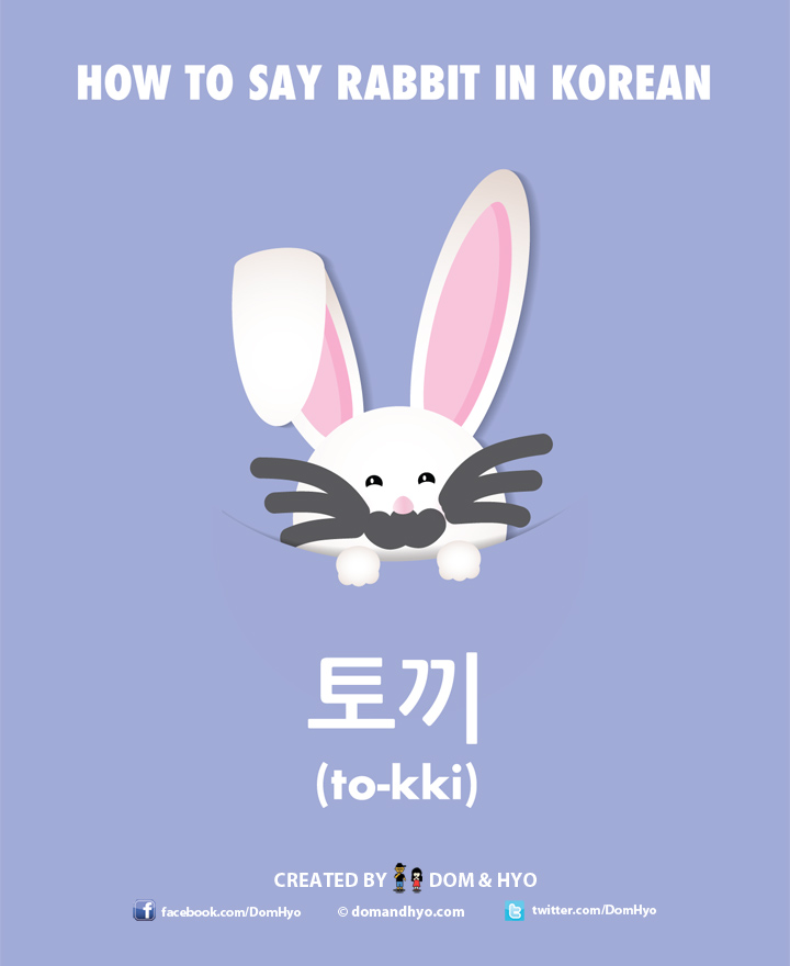 How to Say Rabbit in Korean – Word of the Day | Learn Basic Korean ...